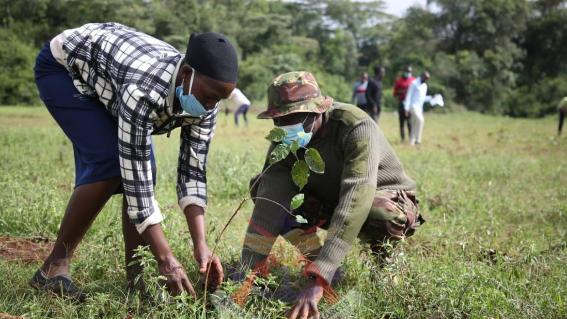 KDF PARTNERS WITH KFS TO PLANT 1500 TREES.